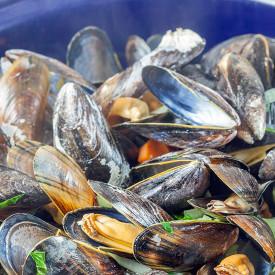 Dutch mussels